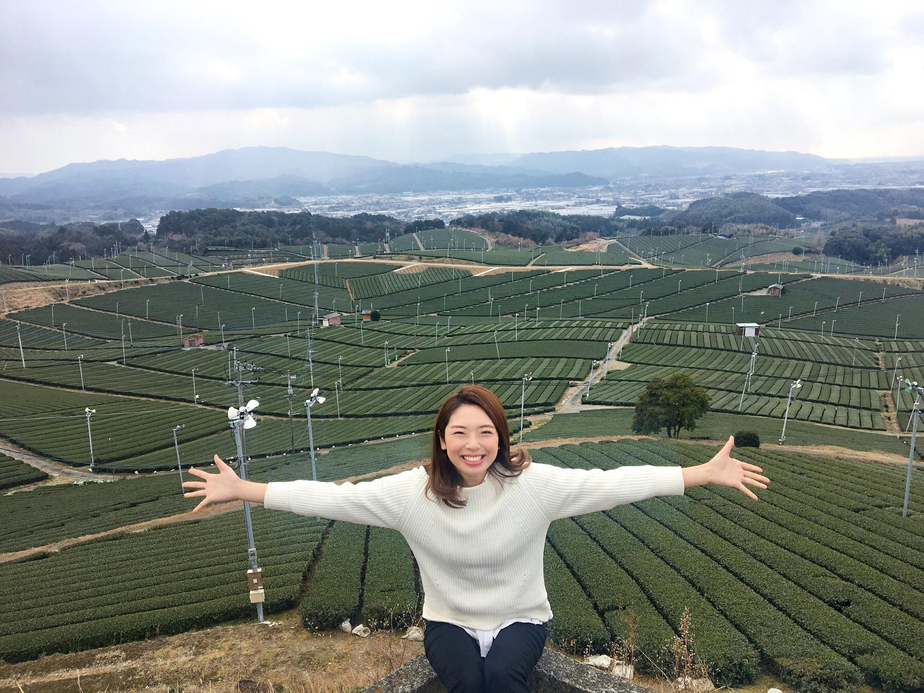 現場至上主義!!日本一の天空の茶畑に行ってきました。